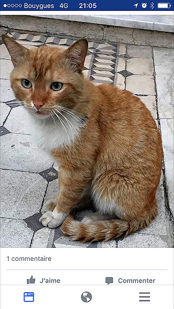 Annick chat roux