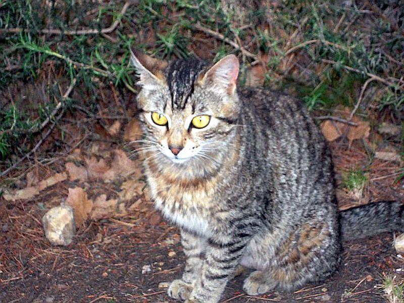 Tigresse 1